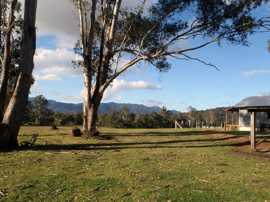 Great scenery - eucalypts and mountains