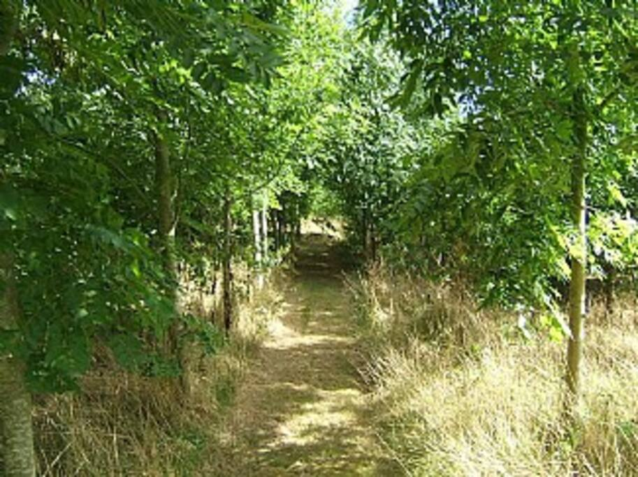 Small wood, securely fenced. Pathways throughout for Lovely short walks and safe for dogs to be off lead.