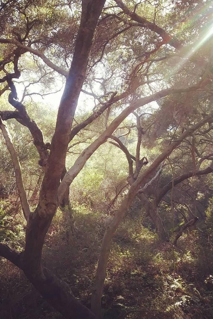 Sun rays illuminate the landscape
