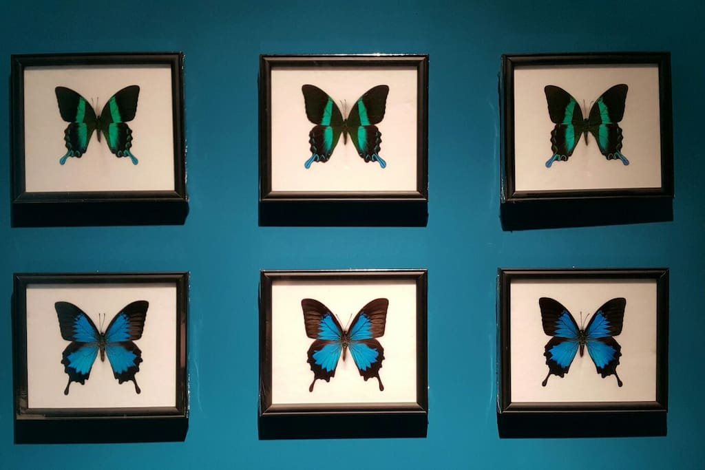 I love butterflies, these are parts of my collections.