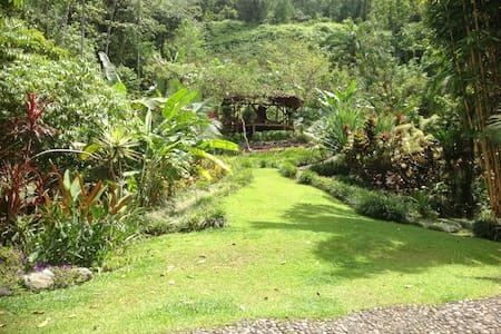 TRUE First growth jungle hotspring - Quepos