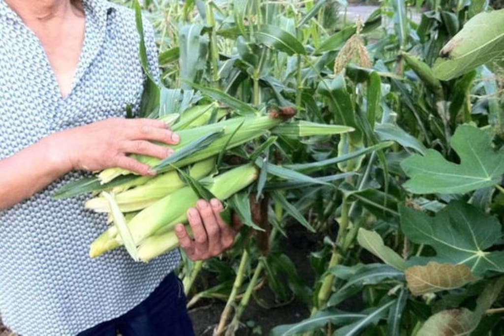 You can join our agricultural workshop, farming experience farming 農業体験,ワークショップ受付中