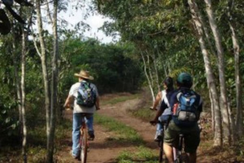 Senderos en bicicleta o caminando de nivel fácil y muy hermosos. llenos de sabiduria y bellos paisajes