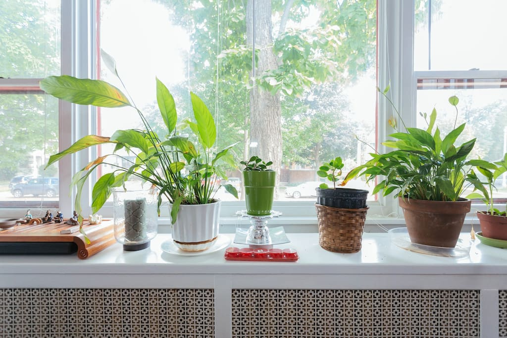 plants living happily outdoors for the summer
