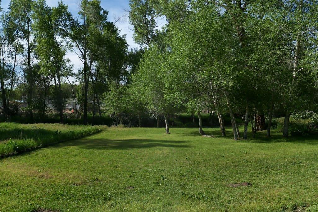 Back yard in summer.