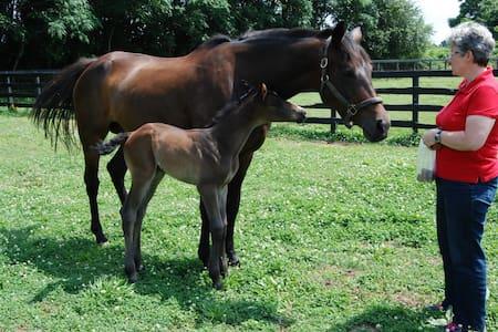Gentleman Horse farm - Athens - Bed & Breakfast
