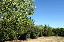 Zona de árboles frutales