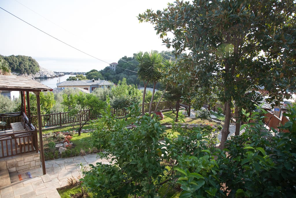 Panoramic view of the large garden