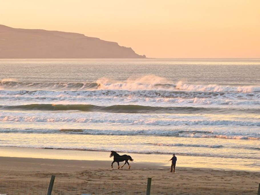 Horses exercising on the beach at sunset