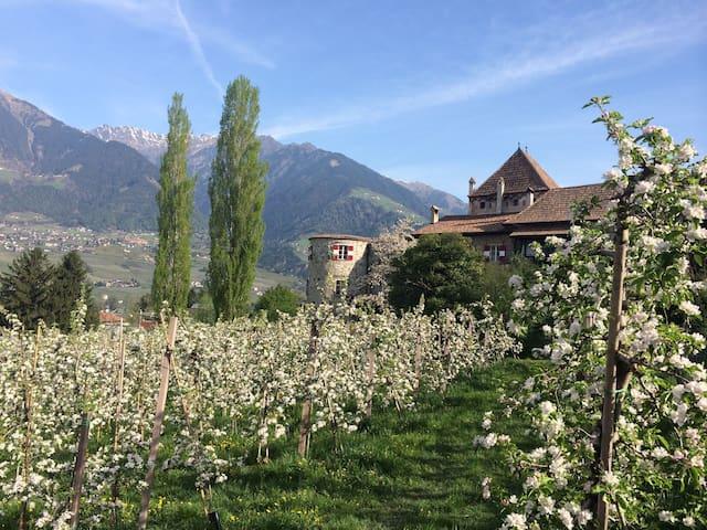 Ferienwohnung Schloss Planta, Meran - Meran