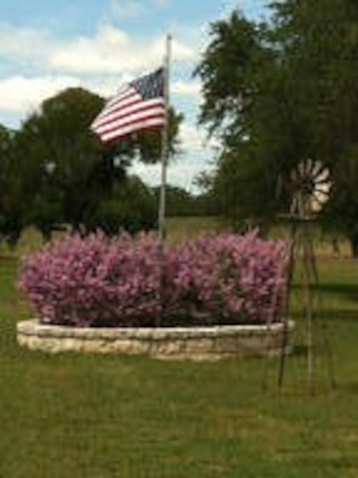 Once again our flag pole with Texas sage