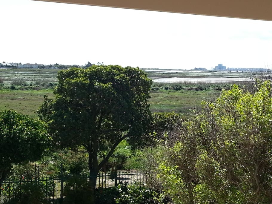 View from the terrace over the Riet Vlei Nature reserve
