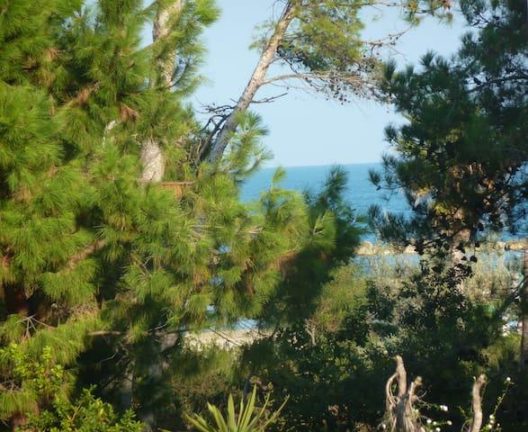 Fronte mare e pineta - Montesilvano - Apartamento