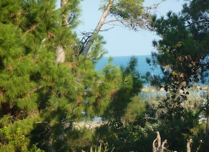 Fronte mare e pineta - Montesilvano - Apartmen