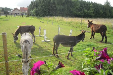 Slapen tussen ezels in de Pipowagen - Aarschot