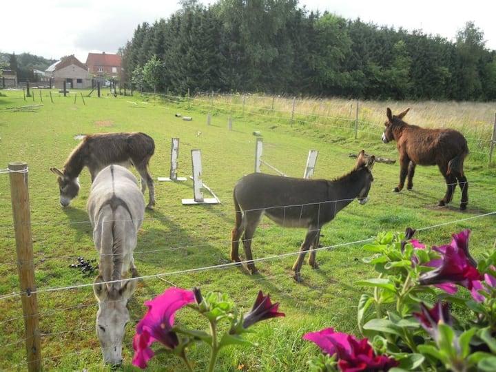 Slapen tussen ezels in de Pipowagen