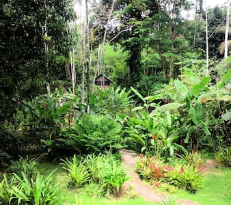 Casa Tres Monos Jungle Lodge - Punta Uva