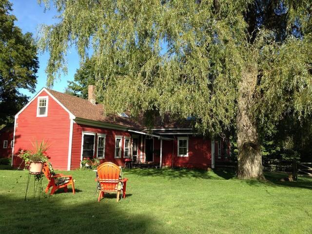 Back yard/garden