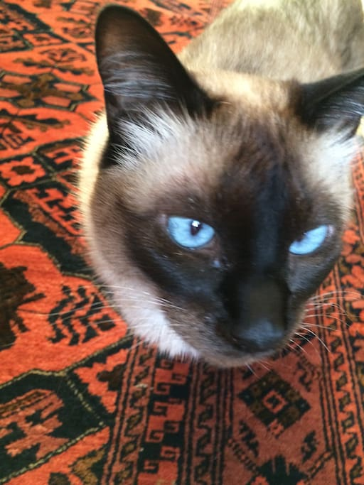 Medora is a friendly cat, but she will stay out of your way . She is very independent.