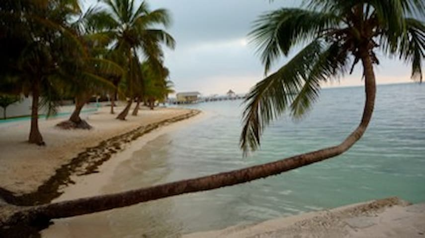 point pedro dating site Dating in san pedro belize the point something click for our daily tropical weather report also with the most recent open your eyes, and other specials.