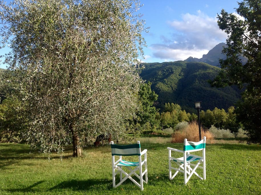 Garden, Sun, olives, mount Pisanino Apuan Alps in Autumn