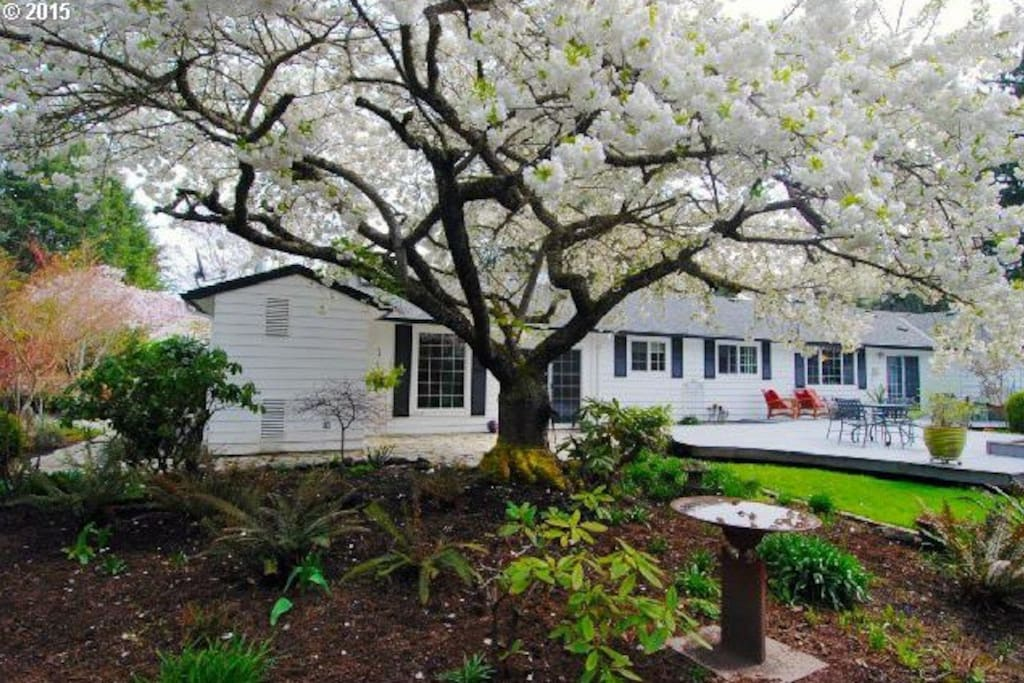 Beautiful blooming trees throughout the yard!