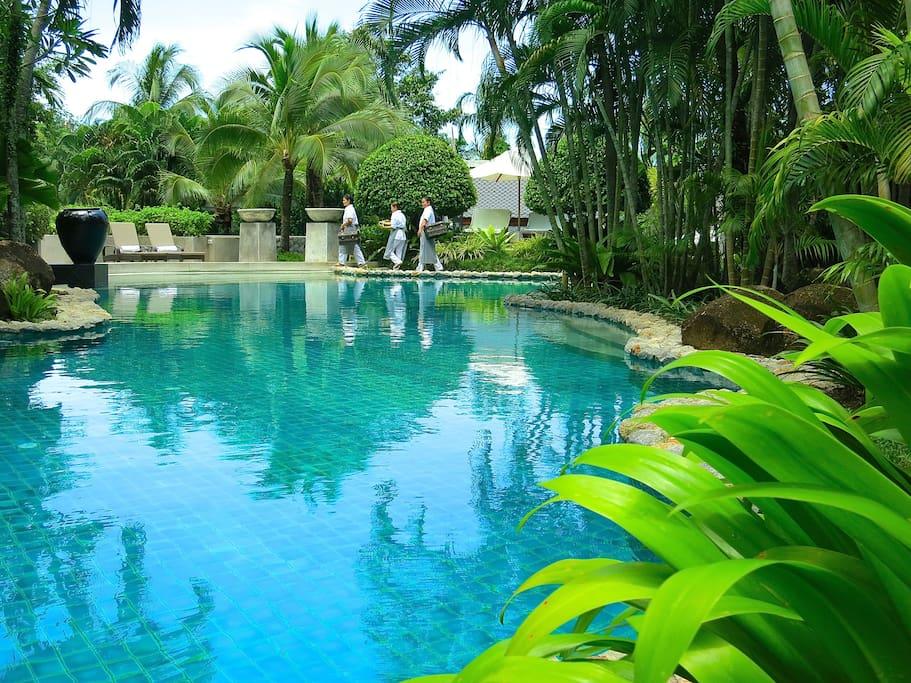 Dive in the 33x8 meter swimming pool