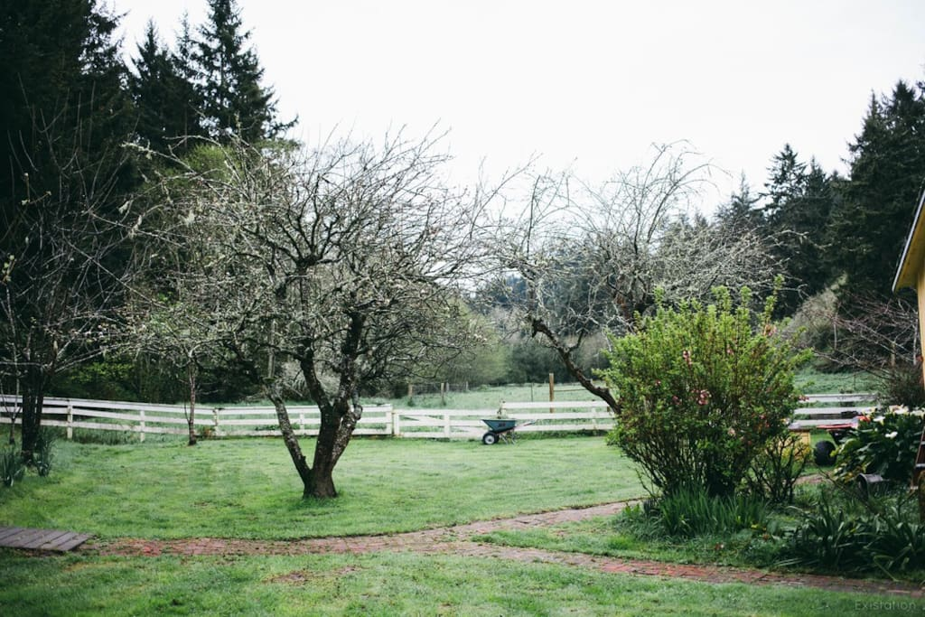 Apple trees in winter, facing south from house.