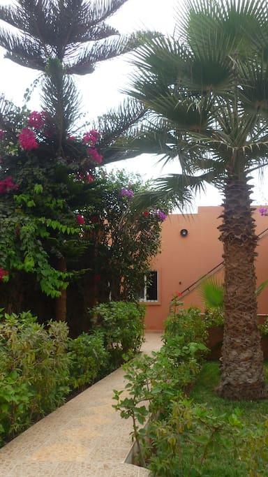 Garten mit Palmen