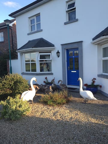 Beautiful double room to let - Portlaoise - Huis
