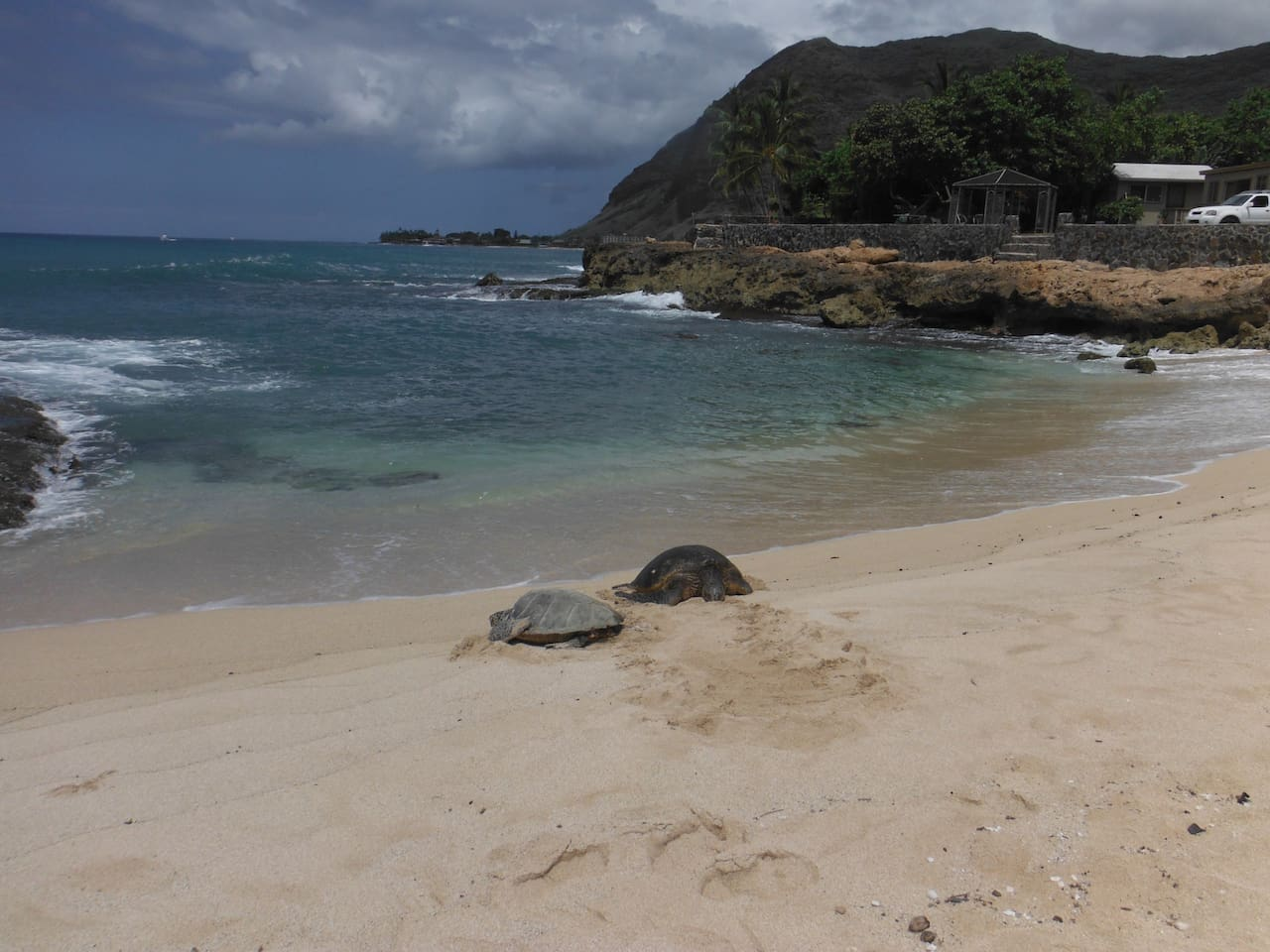 Turtle beach short distance from Banana patch home.