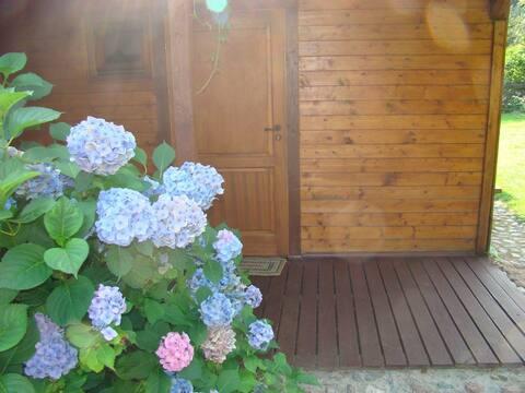 Apartament w drewnie
