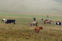 Village caws. November