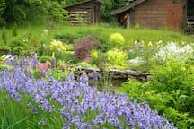 Backyard pond and sauna. May