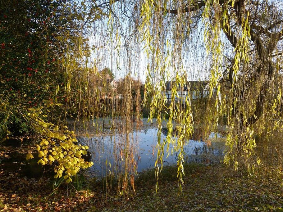 Communal pond