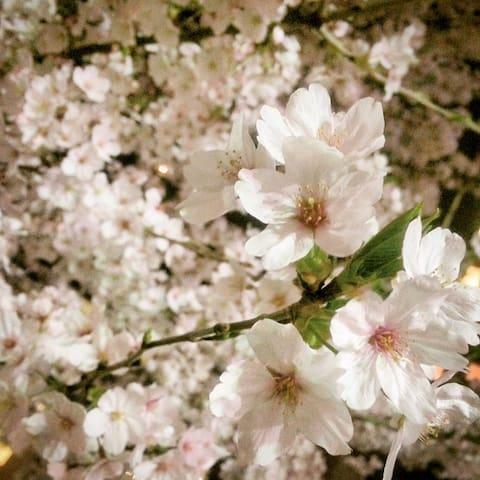 Tokyo Asakusa st 3min Sensoji 30secNear Akihabara
