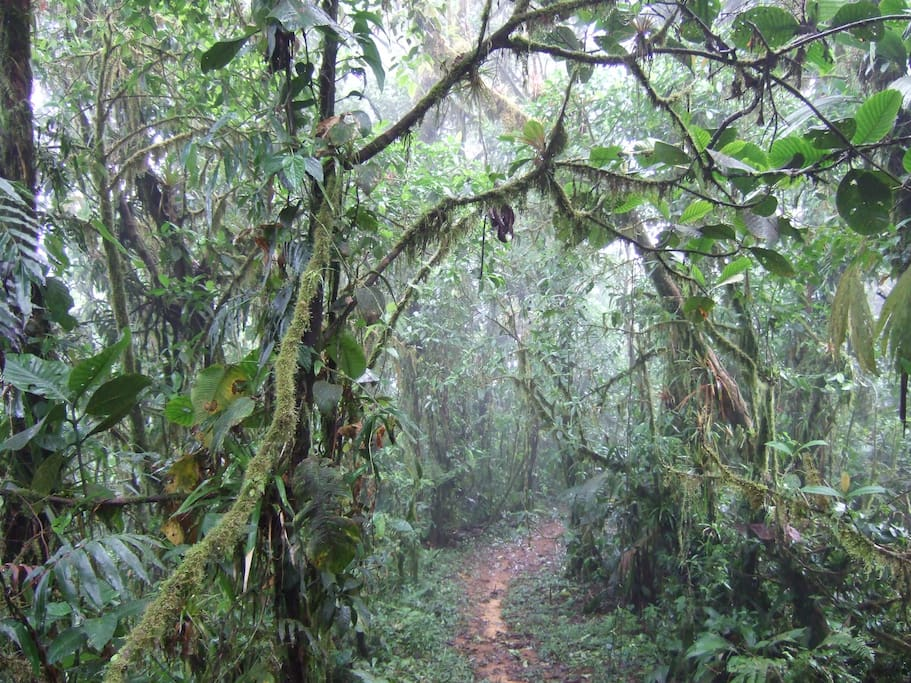 Sendero por el bosque de la finca - Trail through the forest of the properly