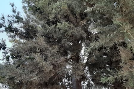 Chambre d'hôtes Basidi à Ain Beida