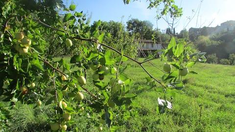 Fruit trees/History/Frutteto/Storia