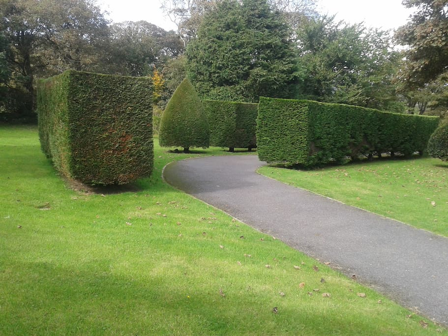 Tree lined drive for privacy