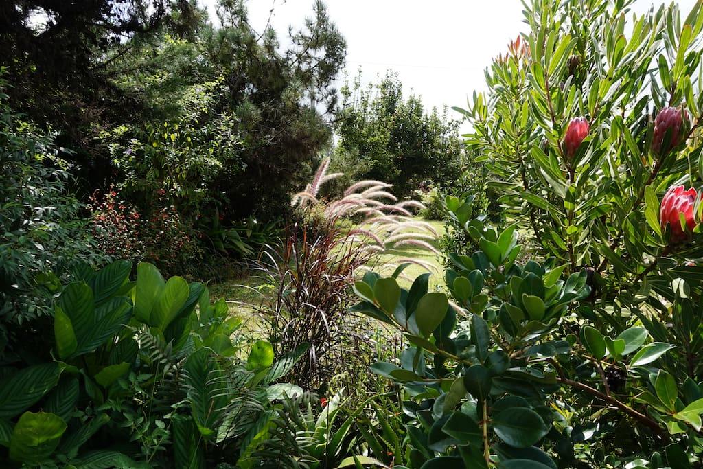 Jardin secret bas de villa apartments for rent in la for Cafres este jardin