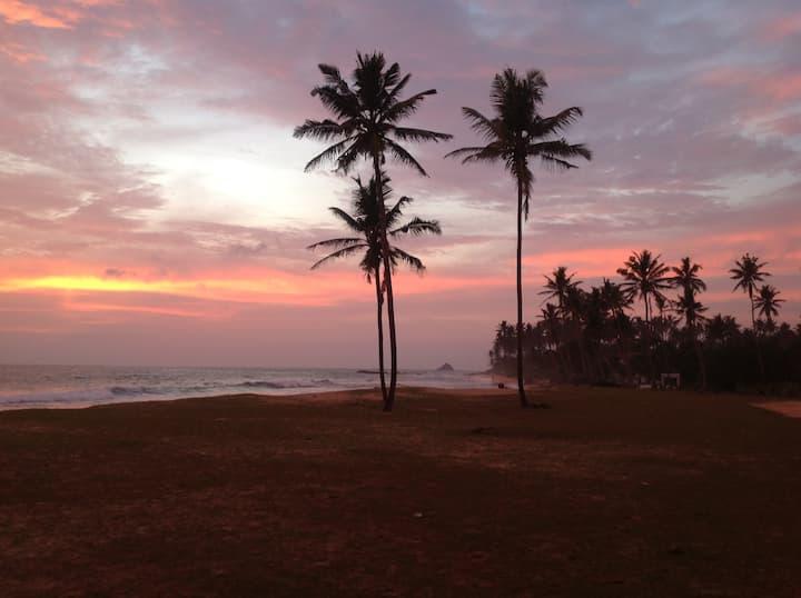 Coconut Surf Inn 2