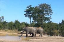 Elephants seen at lodge
