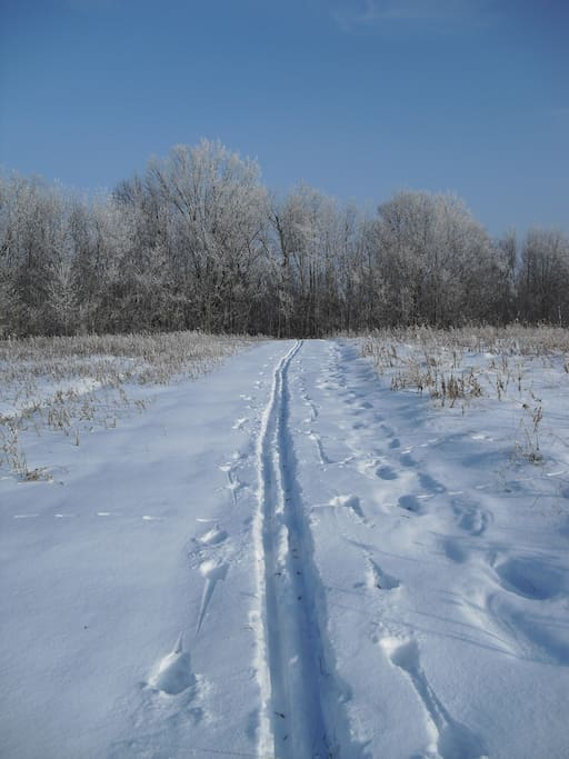 Cross-country ski out the door and at groomed area trails