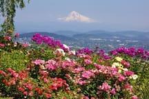 Portland Rose Gardens within 1 mile walking distance.