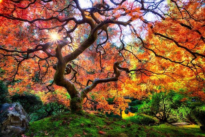 Japanese Garden - within 1 mile walking distance