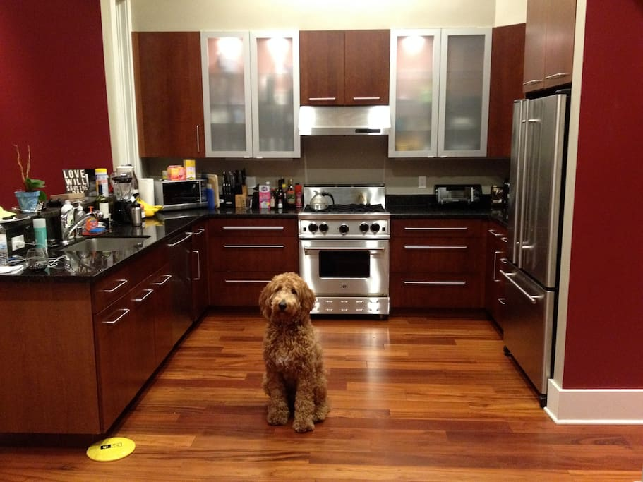 Gourmet Kitchen plus my roommate's great dog, Barney!