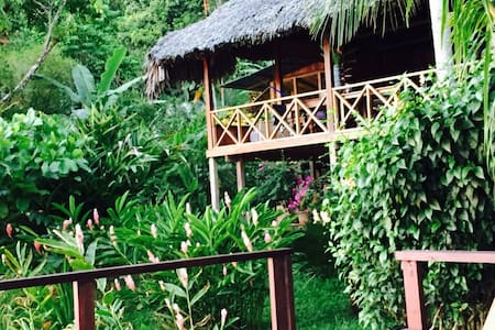 The island Cove is tropical luxury at its finest with a private beach,  three types of monkeys, variety of animals, bird-life, paths that go through the jungle, an open air Rancho so one can sleep at night inside while still experiencing the jungle.