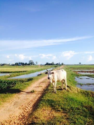 FarmStay siemreap