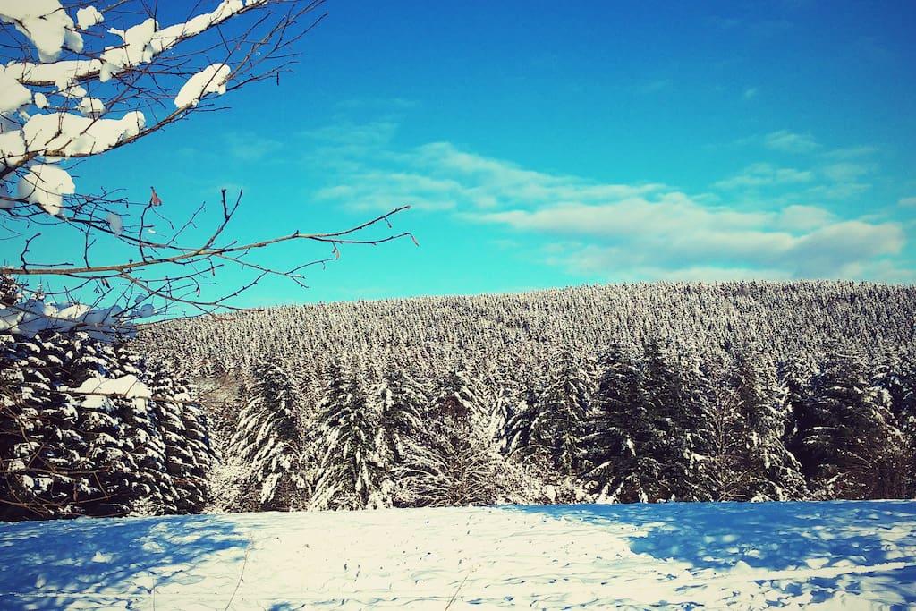Paysage hiver de Francorchamps